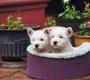 כלב חדש- אילוף בסיסי