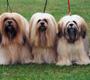 מדריך לטיפול בכלבים