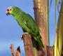 מדריך לטיפול בתוכים ובעלי כנף