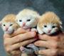 הטיפול בגורי חתולים