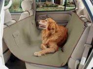 איך לעבור דירה עם כלב
